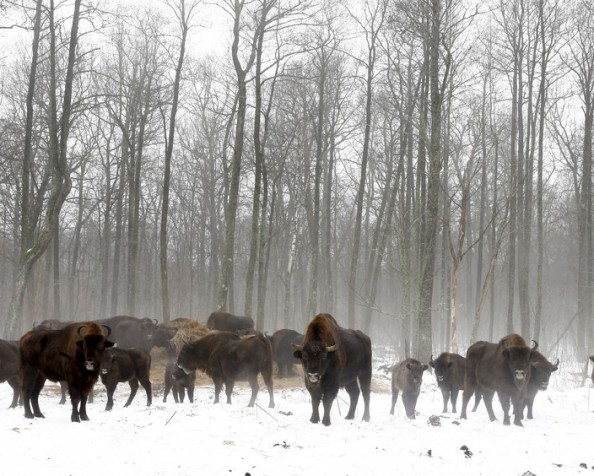 Wildlife thriving without humans in Chernobyl nuclearzone